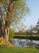 Weeping Willow Tree By A River