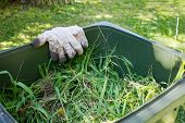 Green Bin Container Filled With Garden Waste. Dirty Gardening Gloves. Spring Clean Up In The Garden. poster