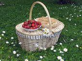 Picnic Basket 3