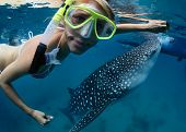 Close up underwater shoot of a young lady snorkeling with gigantic whale shark