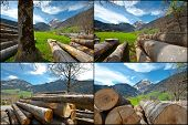 stock photo of afforestation  - Sawed Firewood Dropped High Up in the Swiss Alps Set - JPG
