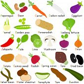 Back to school : A Set of Vector Icons of Vegetable Representing Alphabet A to Z - Dictionary for Ki