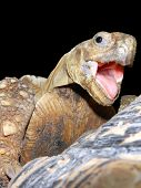 Face of a happy tortoise