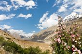 pic of skardu  - Karakorum Flora along the Braldu River Northern Pakistan - JPG
