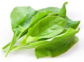 image of sorrel  - Sorrel isolated on white background - JPG