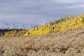 foto of sagebrush  - Snowy mountains ominous clouds and blazing fall colors adorn the mountains aspens and sagebrush steppe of the Wyoming Rocky Mountains - JPG