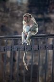 Monkey on a fence