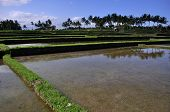 View Ricefields Terraces