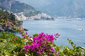 Flowers In The Amalfi Coast, Italy