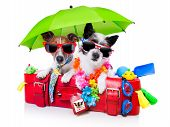picture of toy dog  - holiday dogs on a red bag dressed as tourists - JPG