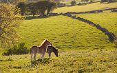 Foals in Derbyshire field