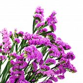 Bouquet From Purple Statice Flowers Isolated On White Background.
