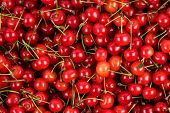 fresh gathered cherries background