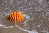 Orange Scallop Shell