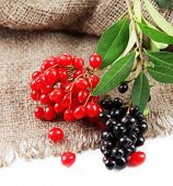 Wild black and red berries with leaves, isolated on white