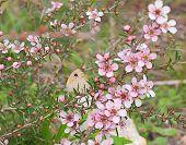 Australian Flower And Butterfly