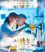 stock photo of scientist  - Attractive young female scientist and her senior male supervisor looking at the cell colony grown in the petri dish in the life science research laboratory  - JPG