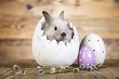 stock photo of bunny ears  - Easter Bunny with egg - JPG
