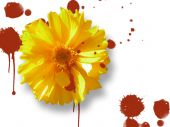 Yellow Flower With Blood