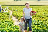 Mother And Little Boy Of 2 Years On Organic Strawberry Farm In Summer