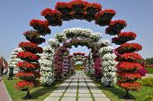 Dubai Miracle Garden in the UAE,