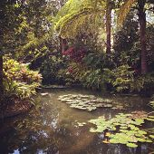 Tropical pond in Summer - Instagram effect