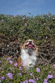 laughing in the flowers