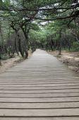 Plank Way,south Korea