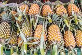Group Of Fresh Pineapple( Ananases).