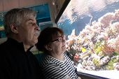 Senior Couple Watching Fishes