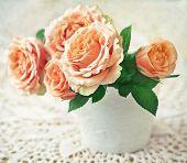 Beautiful fresh roses