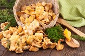 pic of chanterelle mushroom  - Wild Chanterelles Mushrooms on a Wooden Background - JPG