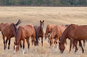 stock photo of steppes  - Herd of horses in the steppe at autumn day - JPG