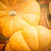 Pumpkins With A Textured Effect