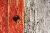 snail crawling on wood texture background