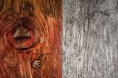 snail on grunge wood background