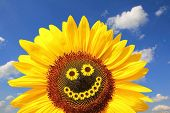 Bright Sunflower With Smiling Face