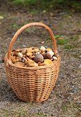 basket  mushrooms