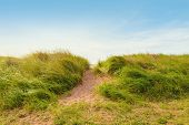 foto of dune grass  - Sand path over dunes with beach grass  - JPG