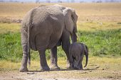 Female elephant with young