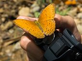 The Butterfly On The Hand That Hold A Camera.