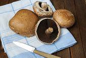foto of portobello mushroom  - Healthy delicious autums vegetables fresh portobello mushrooms  - JPG