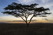 African tree in beautiful sunset