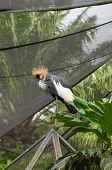 Crowned Crane Among Foliage In Natural Park
