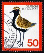 Postage Stamp Germany 1976 Golden Plover, Bird