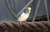 Perched on a rope
