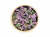 Oregano Wild Marjoram (origanum Vulgare) Medical Flowers In Basket