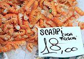 Scampi For Sale In The Italian Fish Market