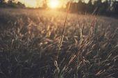 Grass Field & Sunset