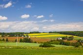 picture of farm landscape  - Summer landscape of farms and fields with red soil - JPG